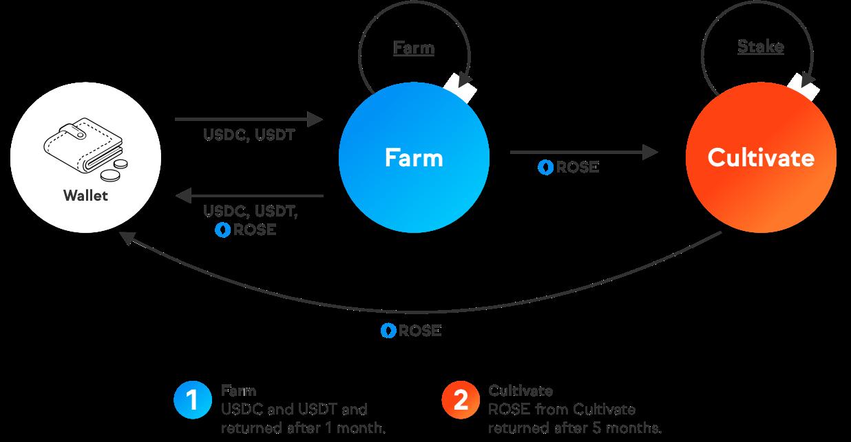 Chương trình Farm Oasis ($ROSE) trên Coinlist - Syndicator